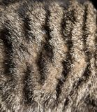 Background of cat fur Stock Photography