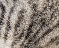 Background of the cat`s fur.  Stock Photography