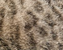 Background of the cat`s fur. Photo of abstract background Stock Image