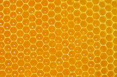 Background cell closeup filled with honey Stock Photo