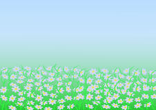 Background of chamomile in the fog. Chamomile field in the fog background vector clipart Stock Photography