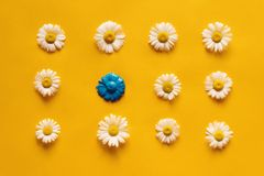 Background with chamomile pattern royalty free stock photos