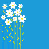 Background chamomile. White camomiles on a blue background. Card, background, vector Stock Images