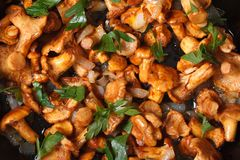 Background chanterelle mushrooms in a frying pan macro Royalty Free Stock Images