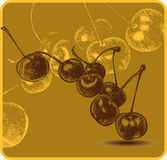 Background with cherries, hand-drawing. Vector ill Royalty Free Stock Images