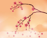 Background  with cherry blossom Stock Photos