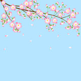 Background with cherry blossom branch Stock Images