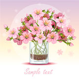 Background with cherry blossom in a glass. Romantic background for your text Stock Images