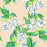 Background cherry branch with flowers. Seamless pattern. Royalty Free Stock Photography
