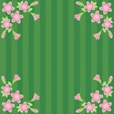 Background with cherry flowers. On green background Royalty Free Stock Image