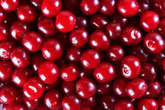 Background of cherry Stock Photography