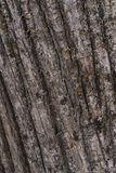 Chestnut bark background un the forest stock image