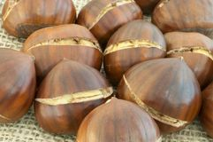 Background of chestnut. Raw natural macro of chestnuts in jute background Stock Photography