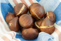 Background of chestnut Stock Image