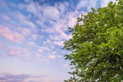 Tree full of fresh green leaves against a blue cloudy sky Royalty Free Stock Photography