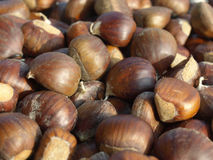 Background of chestnuts Royalty Free Stock Photos