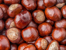 Background of chestnuts Royalty Free Stock Image