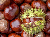 Background of chestnuts Stock Image