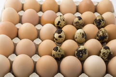 Background of chicken and quail eggs in a cardboard tray. Royalty Free Stock Photos