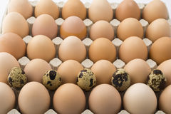 Background of chicken and quail eggs in a cardboard tray. Stock Photography