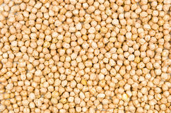 Background with chickpeas Stock Photography