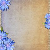Background with chicory Royalty Free Stock Image