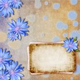 Background with chicory Stock Image