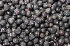 Background of chokeberry. Background of the frozen chokeberry Royalty Free Stock Photography