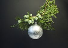 Background for Christmas and New Year. Green spruce branch with a Christmas ball on a black background. Stock Images