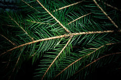 Background of Christmas tree branches.tinted Stock Photo