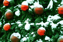 Background - Christmas tree. Background - green Christmas tree with red balls Royalty Free Stock Image