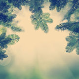 Background with Christmas Tree. Green  Xmas Twig and Light Royalty Free Stock Image
