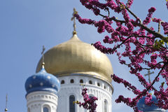 Background .  church and the flowering trees Stock Photos