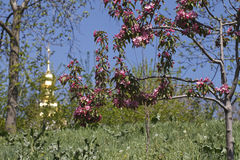 Background .  church and the flowering trees Royalty Free Stock Photography