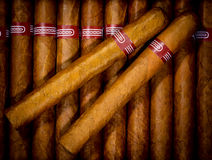 Background cigars in humidor Royalty Free Stock Photos