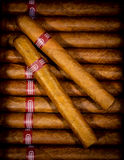 Background cigars in humidor Stock Image