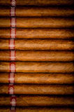 Background cigars in humidor Stock Photos