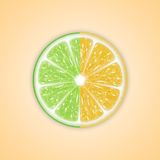 Background with citrus fruits Royalty Free Stock Image