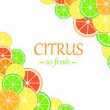Background with citrus fruits slices. Royalty Free Stock Image