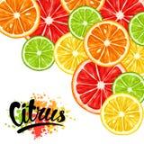 Background with citrus fruits slices. Mix of lemon lime grapefruit and orange.  stock illustration