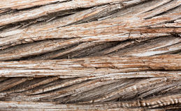 Background close up of cedar trunk bark Royalty Free Stock Photography