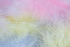 Background of close up image of pastel feathers Stock Photos