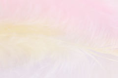 Background of close up image of pastel pink, yellow and blue fea Stock Photos
