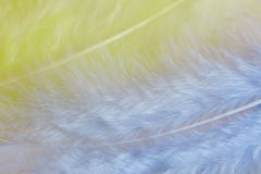 Background of close up image of pastel yellow and blue feathers Stock Images