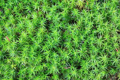 Background, close up of moss. Background, texture. Close up of moss stock photo
