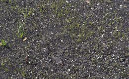 Background from a close-up of organic soil. On a city flowerbed royalty free stock images