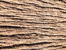 Background close up view of cracked rough tree trunk bark textur. E; essex; england; uk Royalty Free Stock Photo