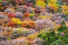 background of closeup Autumn tree color royalty free stock photo