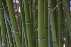 Background - Closeup of bamboo stalks Royalty Free Stock Photography
