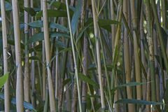 Background - Closeup of bamboo stalks Stock Photo